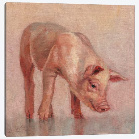 Piglet Canvas Print #STG259} by David Stribbling Canvas Art