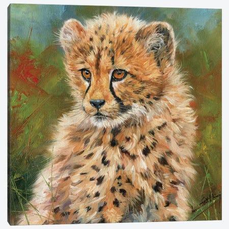 Cheetah Cub Portrait Canvas Print #STG25} by David Stribbling Canvas Print