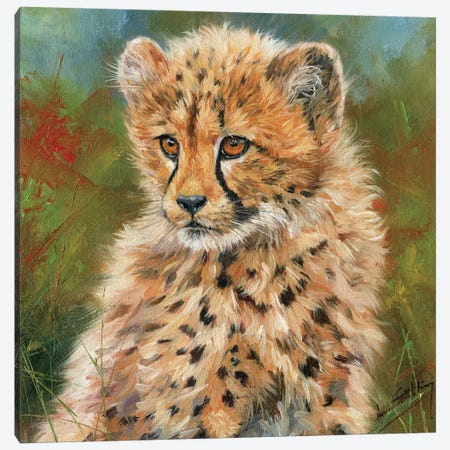 Cheetah Cub Portrait Canvas Print #STG25} by David Stribbling Canvas Print