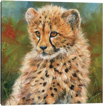 Cheetah Cub Portrait Canvas Art Print