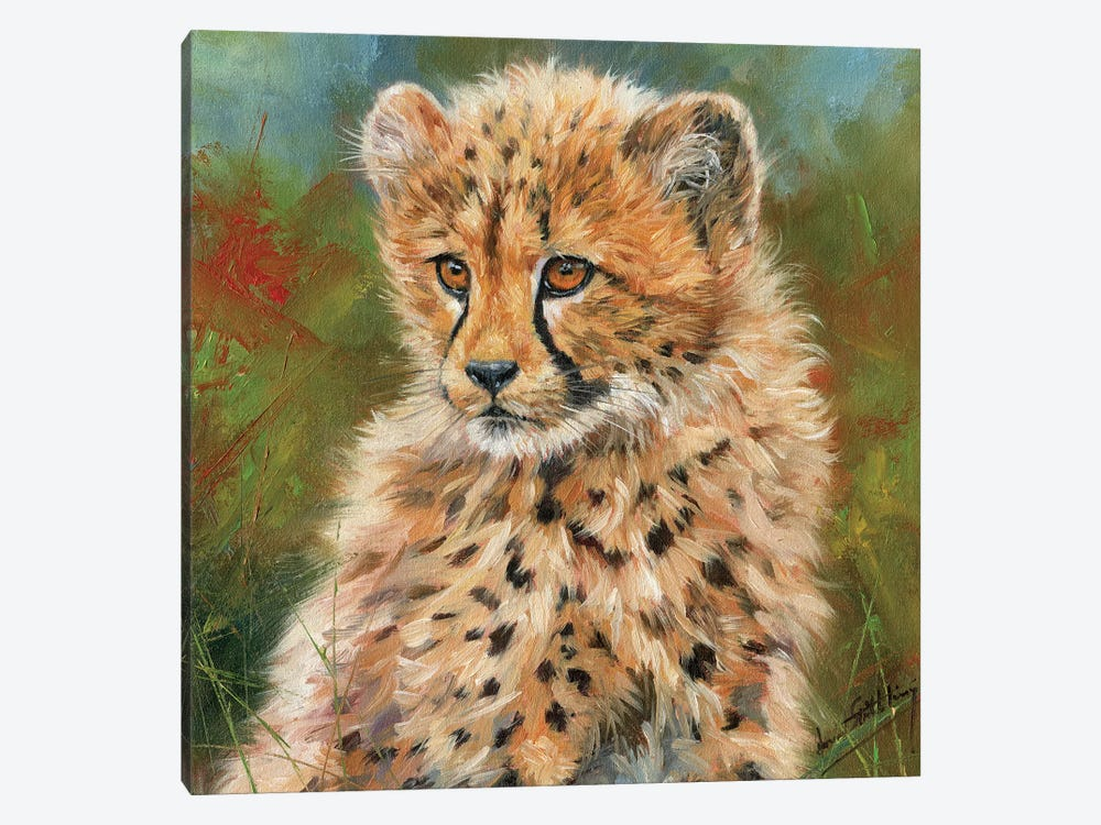 Cheetah Cub Portrait by David Stribbling 1-piece Canvas Art