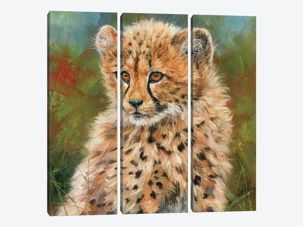 Cheetah Cub Portrait by David Stribbling 3-piece Canvas Art