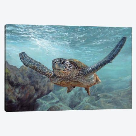 Sea Diver Canvas Print #STG260} by David Stribbling Art Print