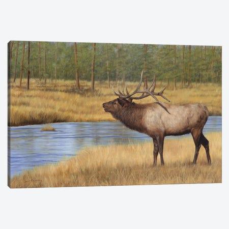 Bull Elk By River Canvas Print #STG265} by David Stribbling Canvas Art