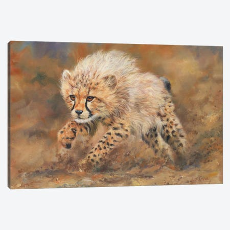 Cheetah Dust Canvas Print #STG26} by David Stribbling Canvas Art Print