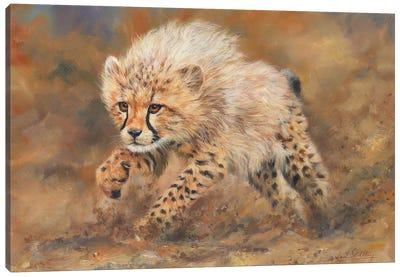 Cheetah Dust Canvas Art Print