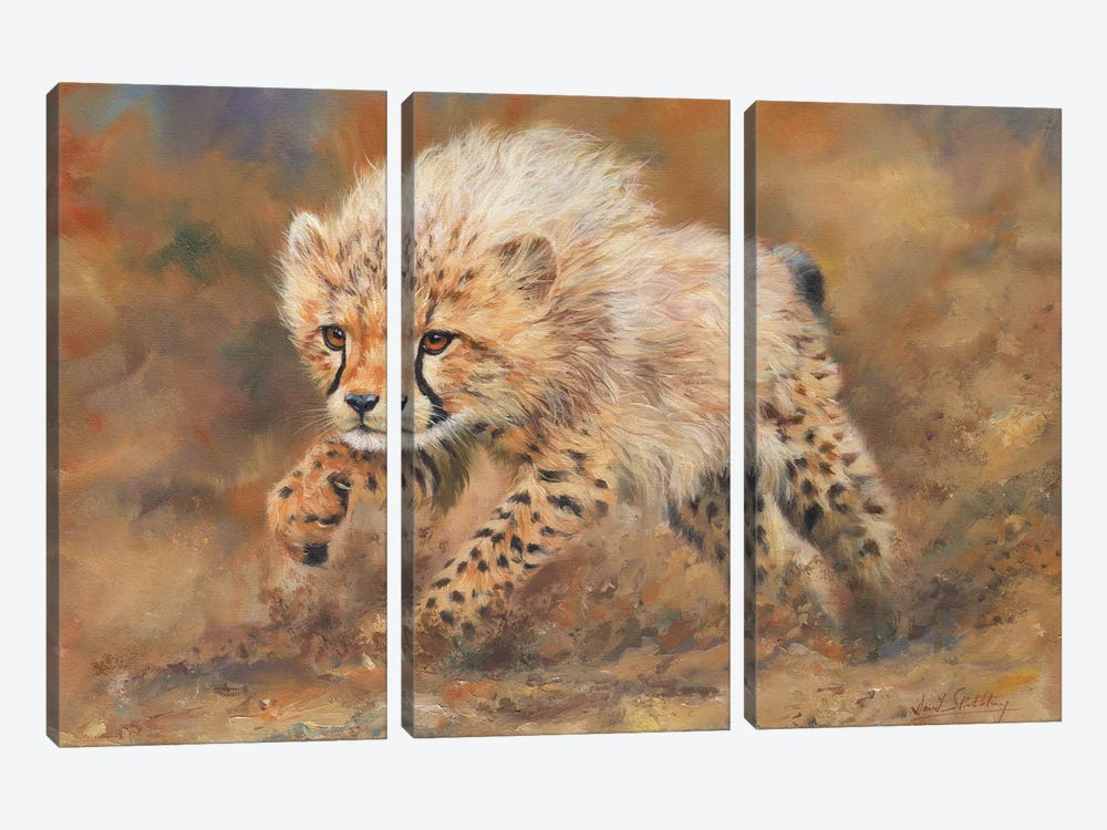 Cheetah Dust by David Stribbling 3-piece Canvas Art Print