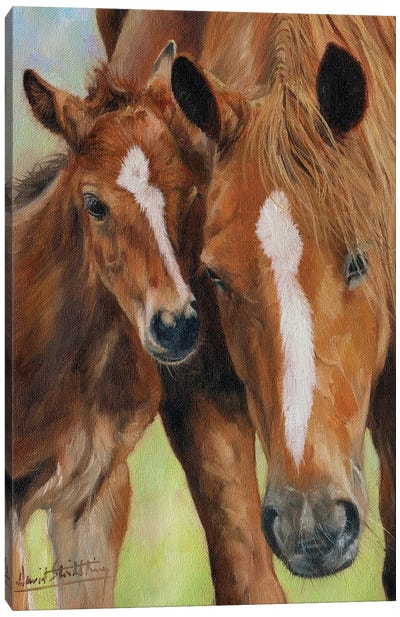 Mother and Foal Canvas Art Print