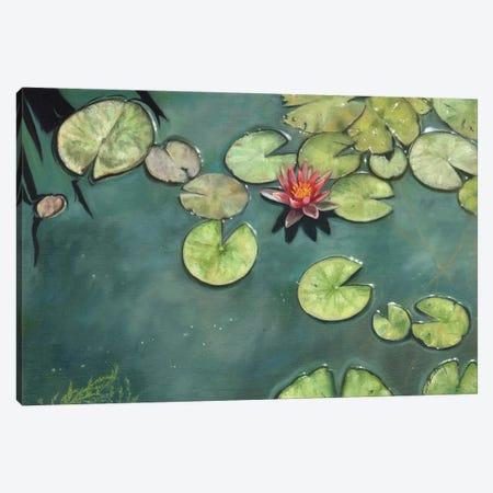 Lily Pond Canvas Print #STG274} by David Stribbling Canvas Print