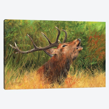 Call Of The Wild - Red Deer Canvas Print #STG278} by David Stribbling Canvas Artwork