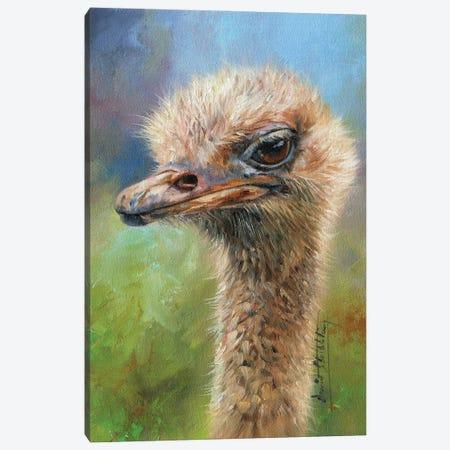 Ostrich Portrait Canvas Print #STG279} by David Stribbling Canvas Artwork