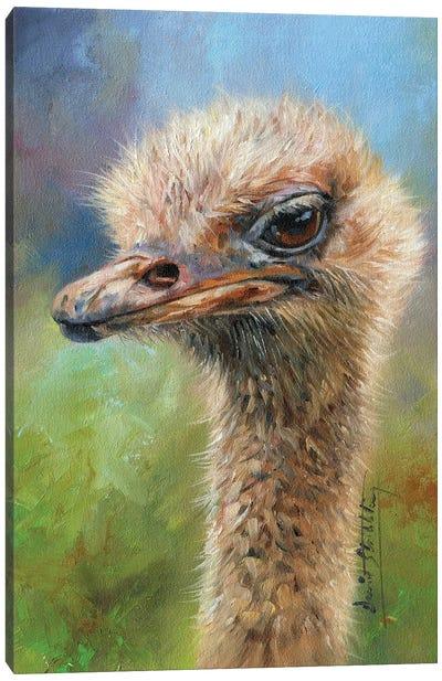Ostrich Portrait Canvas Art Print