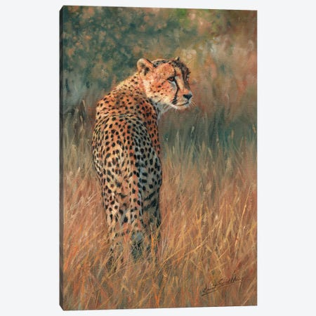 Cheetah Last Light Canvas Print #STG27} by David Stribbling Canvas Art Print