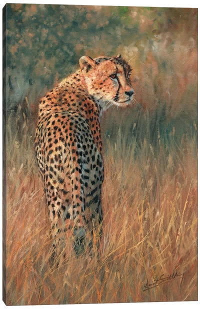 Cheetah Last Light Canvas Art Print