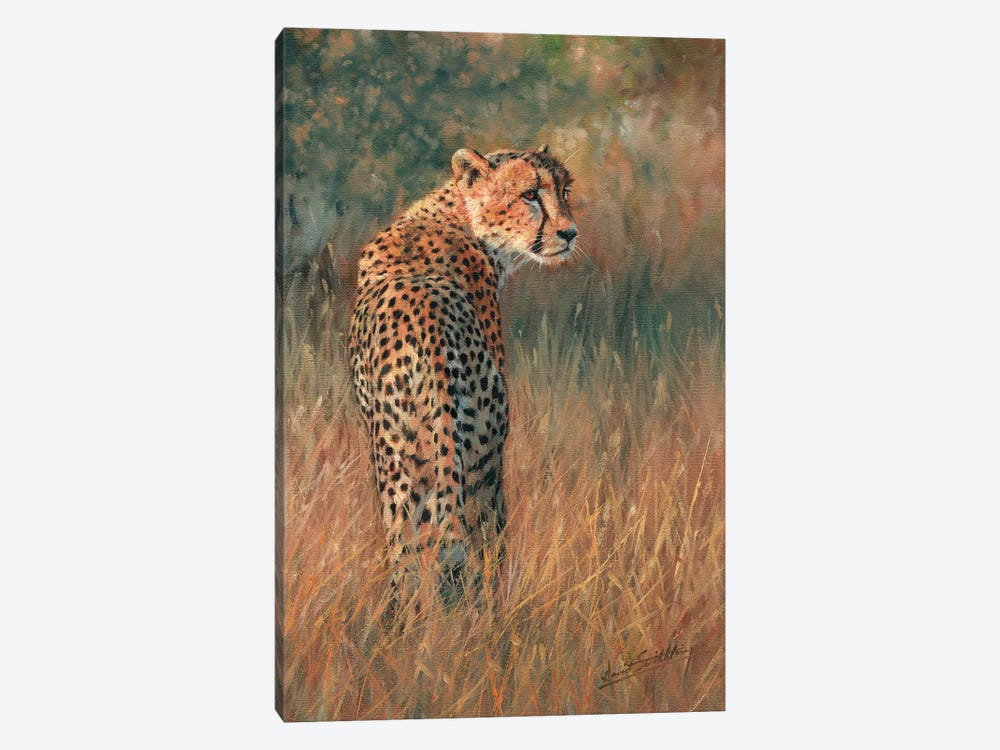 Cheetah Last Light by David Stribbling 1-piece Canvas Artwork
