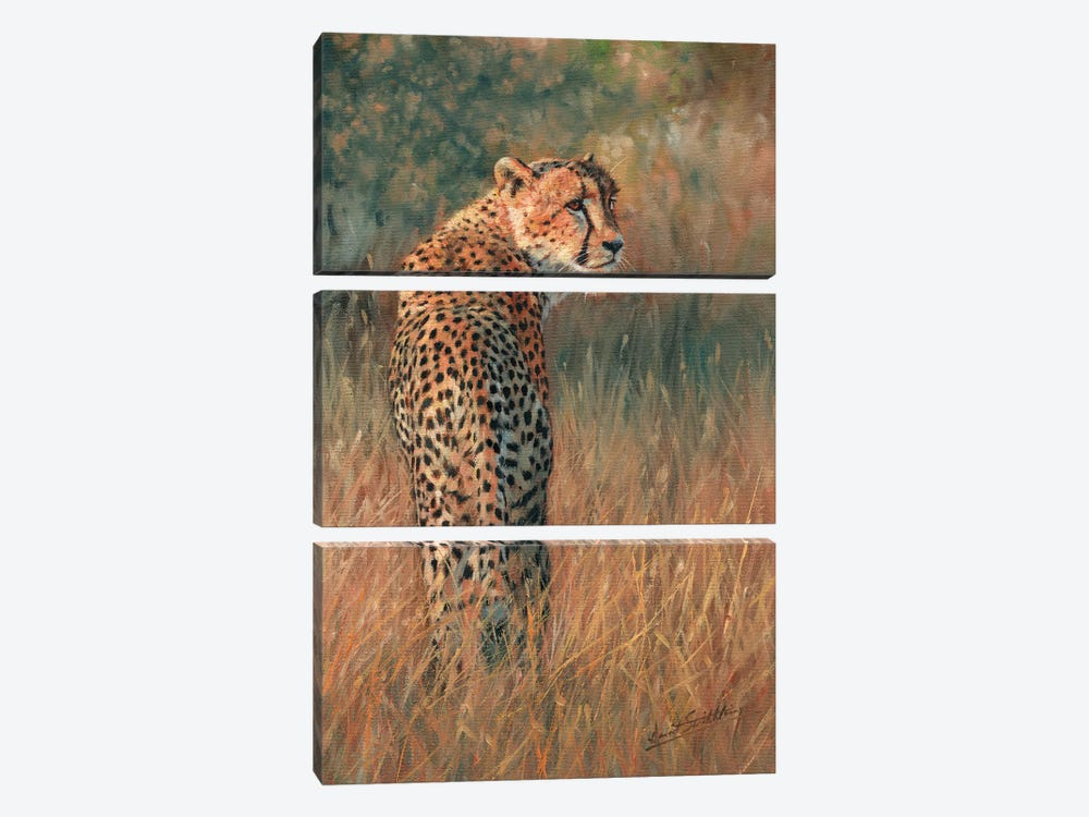 Cheetah Last Light by David Stribbling 3-piece Canvas Wall Art