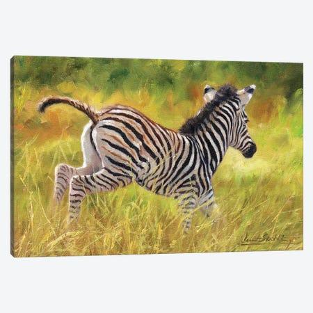 Zebra Foal Running Canvas Print #STG281} by David Stribbling Art Print