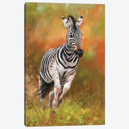 Zebra - Kicking Up Dust Canvas Print #STG282} by David Stribbling Canvas Print