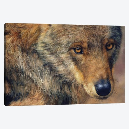 A Portrait Of A Wolf Canvas Print #STG285} by David Stribbling Canvas Artwork