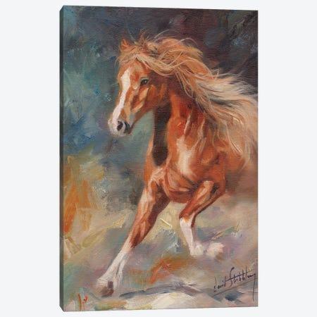Dancing Horse Canvas Print #STG288} by David Stribbling Canvas Print