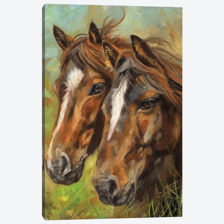Horses Heads Canvas Print #STG289} by David Stribbling Canvas Print