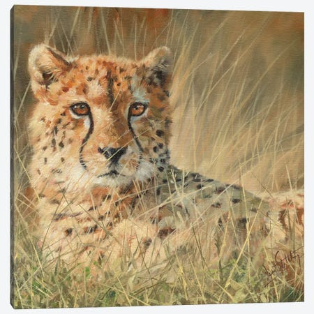 Cheetah Laying In Long Grass Canvas Print #STG28} by David Stribbling Canvas Art