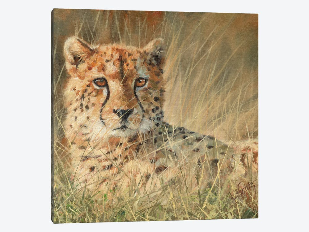 Cheetah Laying In Long Grass by David Stribbling 1-piece Art Print