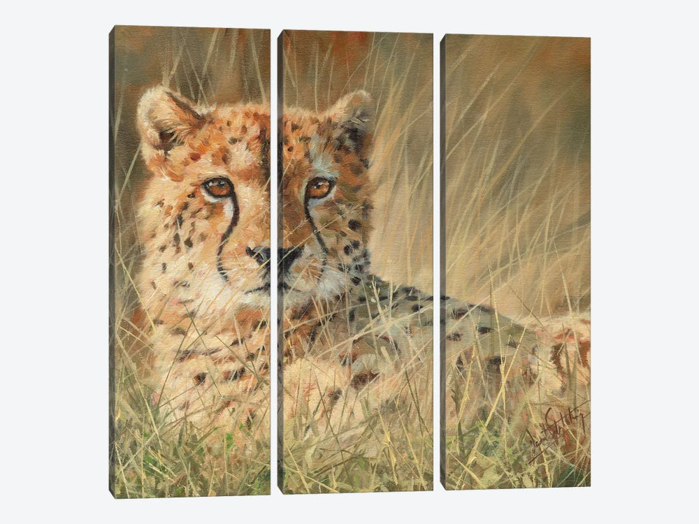 Cheetah Laying In Long Grass by David Stribbling 3-piece Art Print