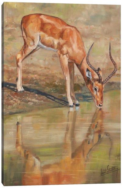 Impala Reflections Canvas Art Print