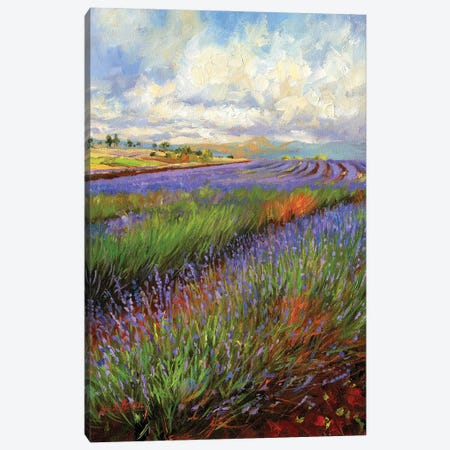 Lavender Field Canvas Print #STG291} by David Stribbling Canvas Wall Art