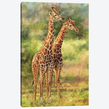 Pair Of Giraffes Canvas Print #STG293} by David Stribbling Canvas Wall Art