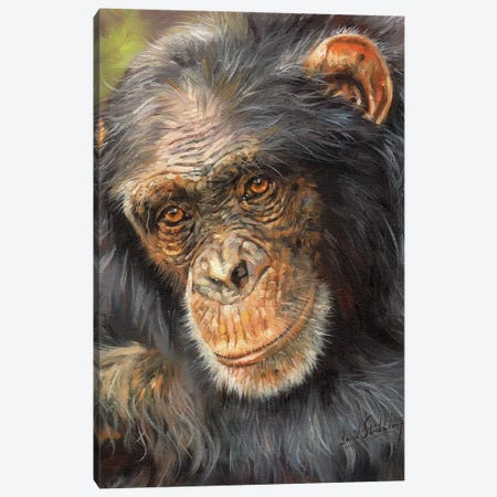Wise Old Eyes Canvas Print #STG294} by David Stribbling Canvas Print