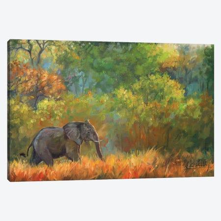 Elephant Impressions Canvas Print #STG296} by David Stribbling Canvas Art Print