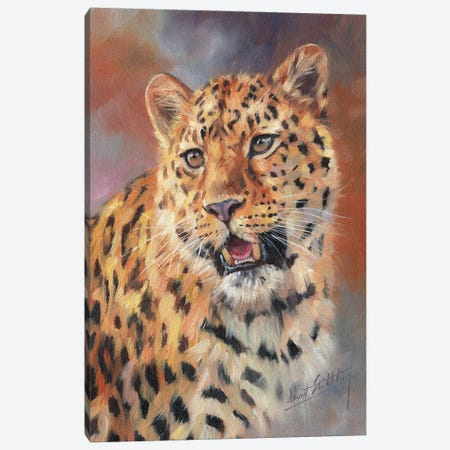 Leopard Impressions Canvas Print #STG299} by David Stribbling Canvas Wall Art