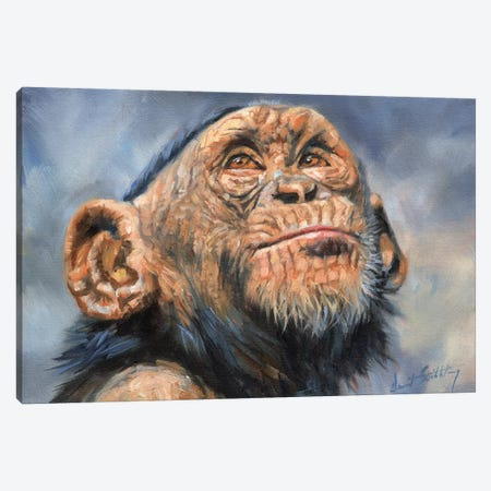Chimp Canvas Print #STG29} by David Stribbling Canvas Wall Art