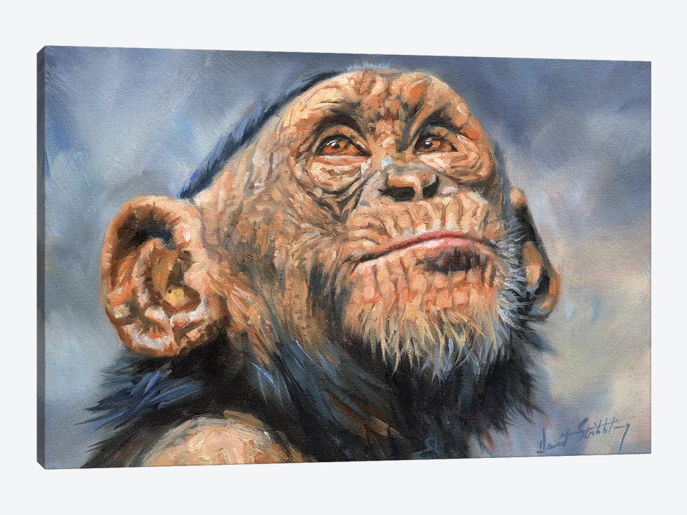 Chimp by David Stribbling 1-piece Canvas Wall Art