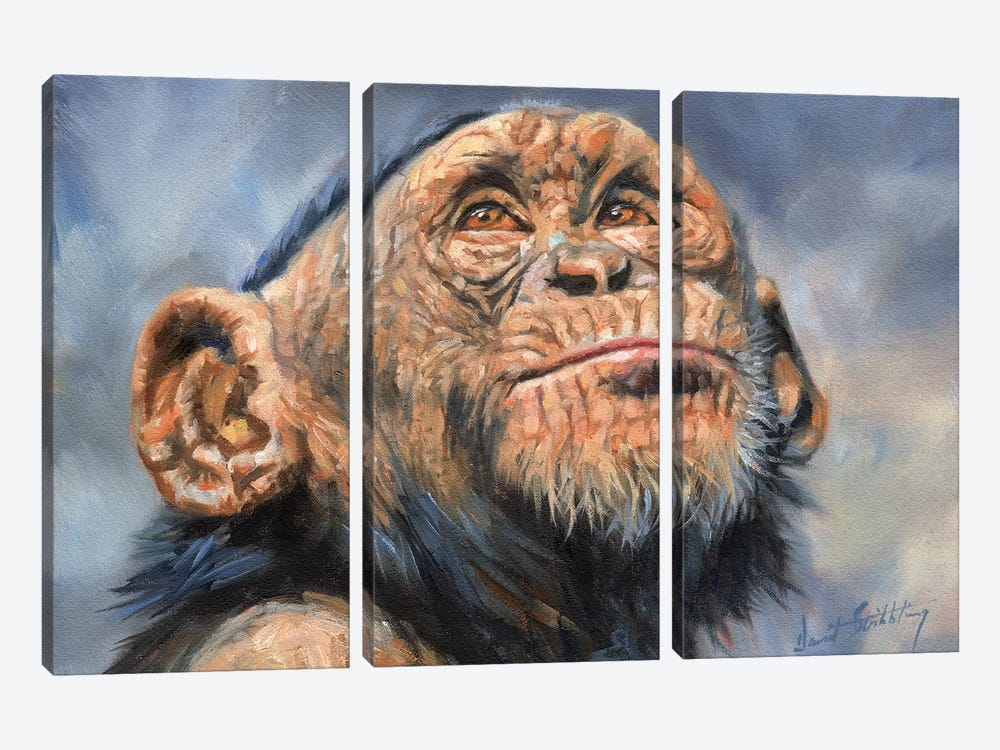 Chimp by David Stribbling 3-piece Canvas Wall Art