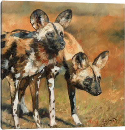 African Wild Dogs by David Stribbling Canvas Art Print
