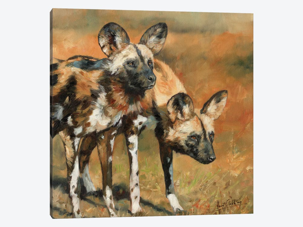 African Wild Dogs by David Stribbling 1-piece Canvas Wall Art