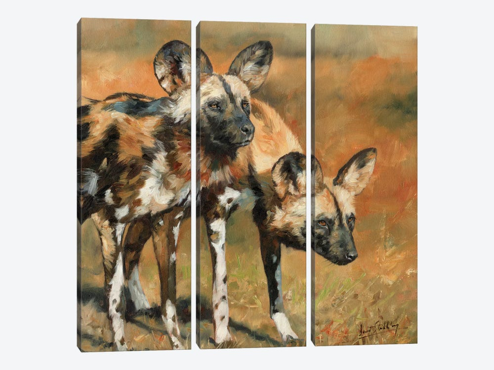 African Wild Dogs by David Stribbling 3-piece Canvas Artwork