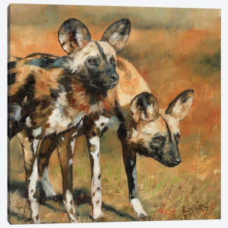 African Wild Dogs Canvas Print #STG2} by David Stribbling Canvas Print