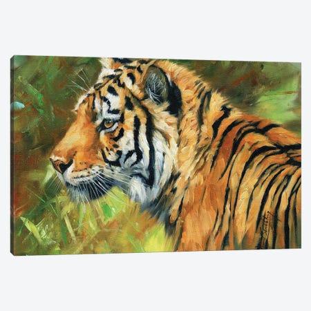 Tiger Impressions Canvas Print #STG301} by David Stribbling Canvas Artwork