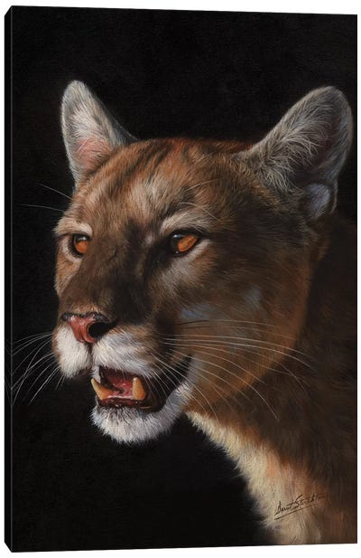 Cougar by David Stribbling Canvas Art Print