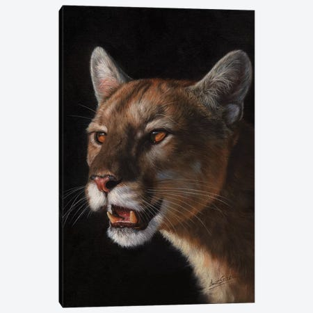Cougar 3-Piece Canvas #STG30} by David Stribbling Canvas Art Print