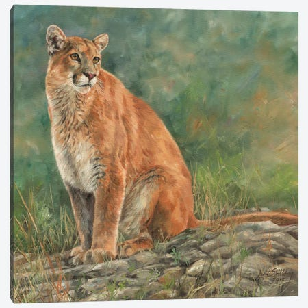 Cougar Sitting Canvas Print #STG31} by David Stribbling Art Print