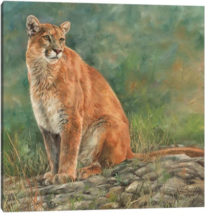 Cougar Sitting Canvas Art Print