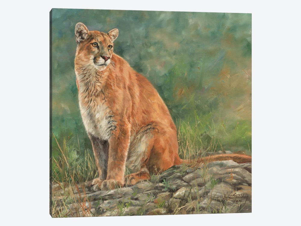 Cougar Sitting by David Stribbling 1-piece Canvas Print