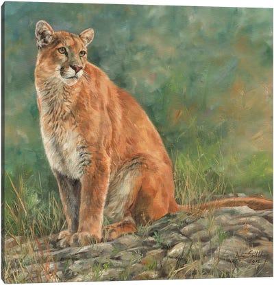 Cougar Sitting Canvas Art Print