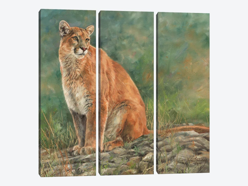 Cougar Sitting by David Stribbling 3-piece Art Print