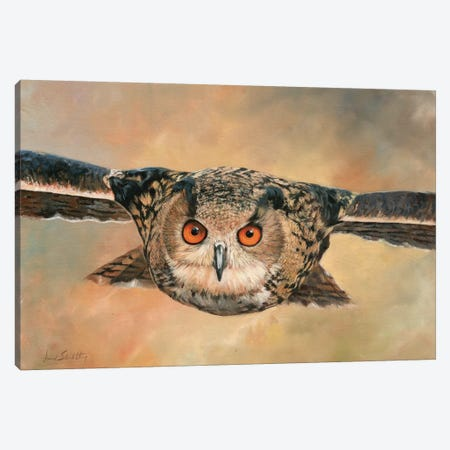 Eagle Owl Canvas Print #STG33} by David Stribbling Canvas Print